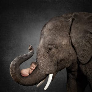 prv1 4 300x300 - Elephant Black Background