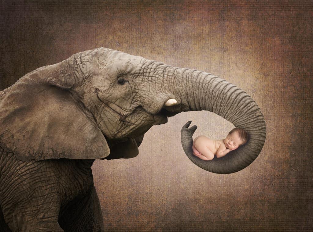 prv1 5 1024x761 - Elephant