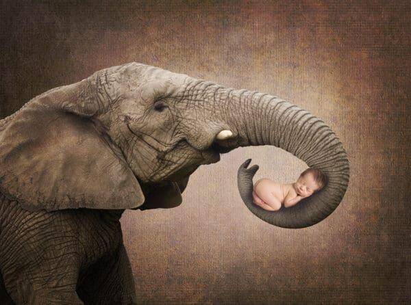 prv1 5 600x446 - Elephant