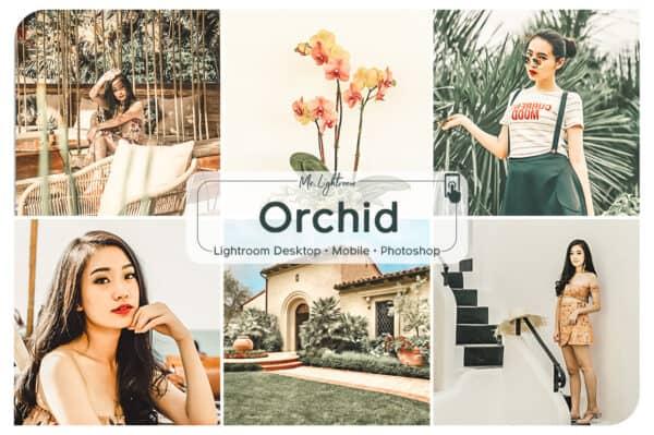 Orchid 1 600x399 - Orchid Lightroom Desktop and Mobile Presets