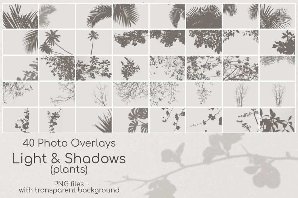 Plant Shadows 2.1 1024x681 - Plant Shadows Overlays
