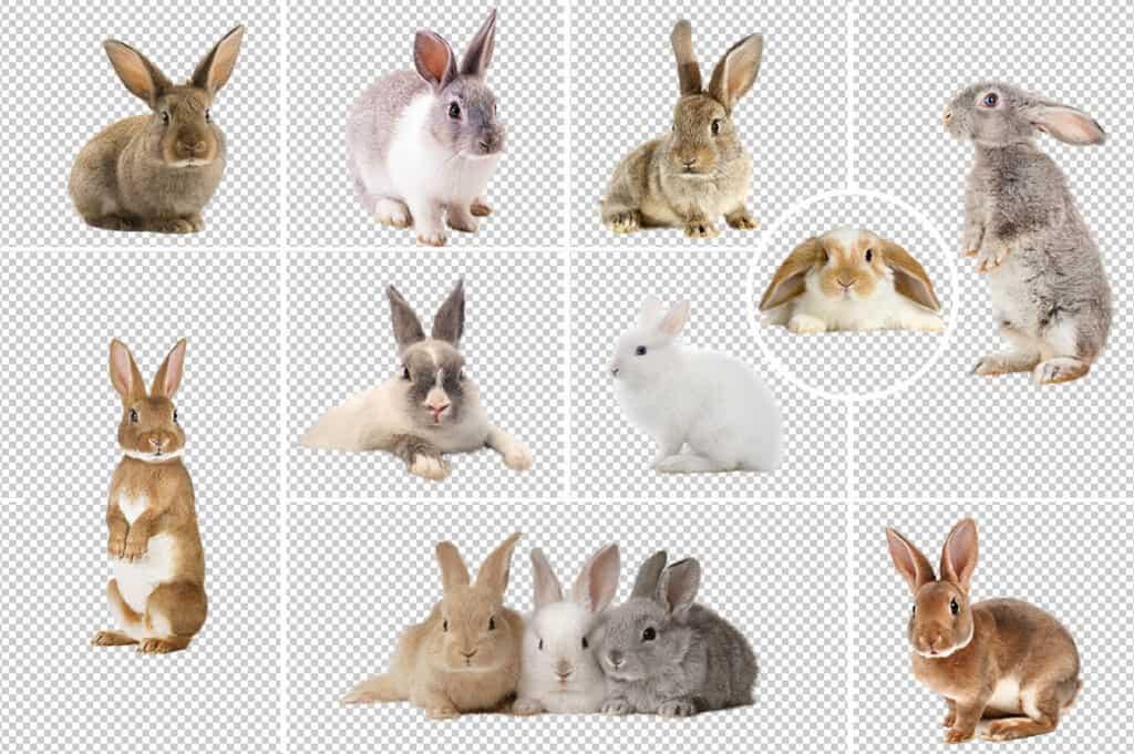Prv2 1024x681 - Spring Bunnies - Easter overlays
