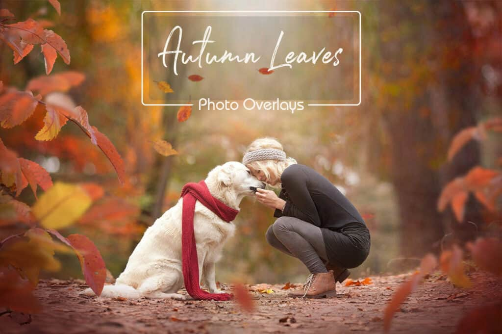 prv1 2 1024x681 - Autumn Leaves Overlays