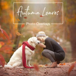 prv1 2 300x300 - Autumn Leaves Overlays
