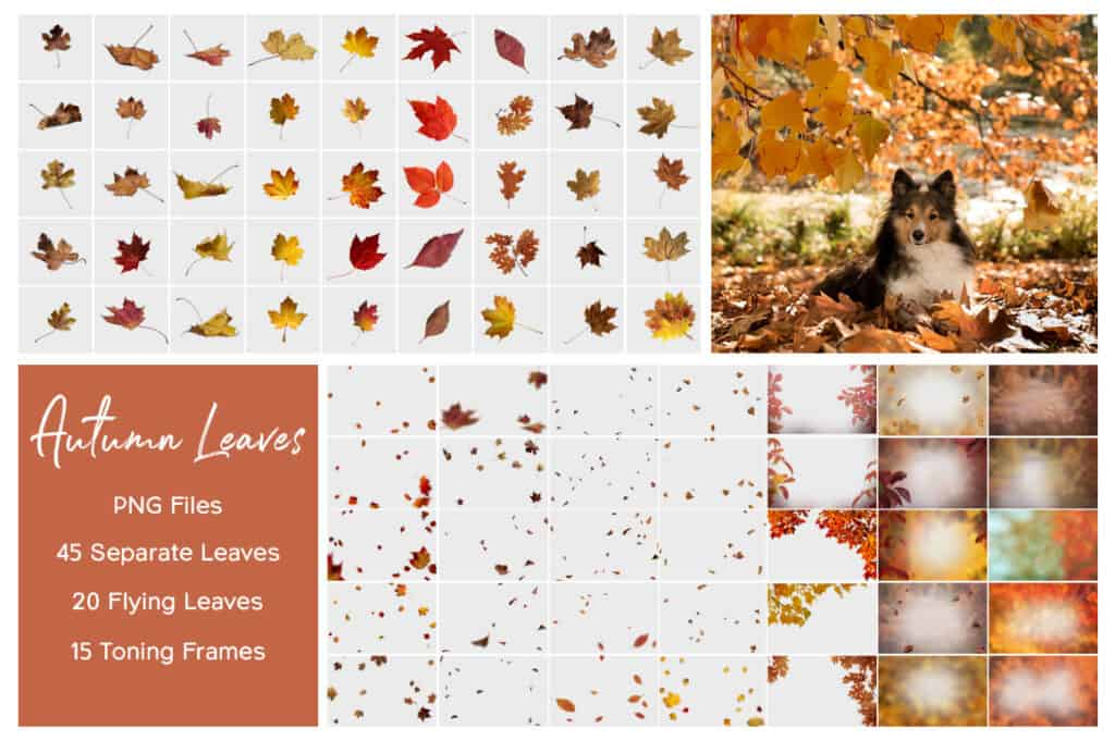 prv2 1 1024x681 - Autumn Leaves Overlays