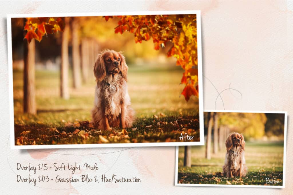 prv4 2 1024x681 - Autumn Leaves Overlays