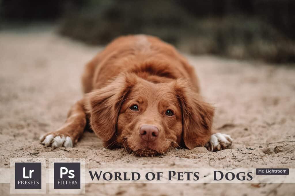 World of Pets Dogs prv01 1024x683 - Dogs Lightroom Desktop and Mobile Presets