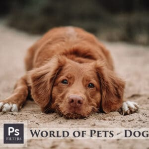 Dogs Lightroom Desktop and Mobile Presets