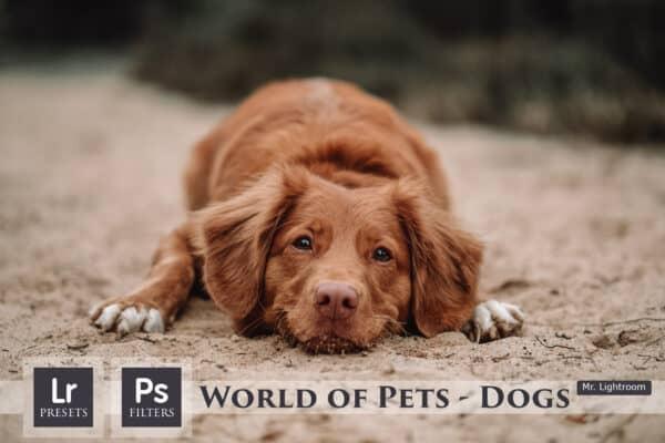Dogs Lightroom Desktop and Mobile Presets