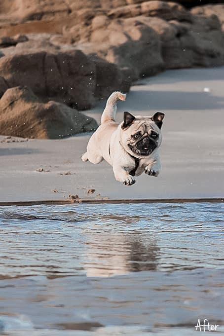 World of Pets Dogs prv02.2 - Dogs Lightroom Desktop and Mobile Presets