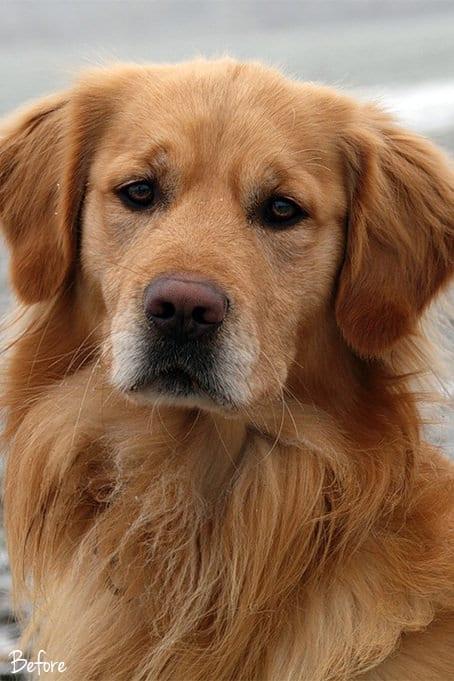World of Pets Dogs prv03.1 - Dogs Lightroom Desktop and Mobile Presets