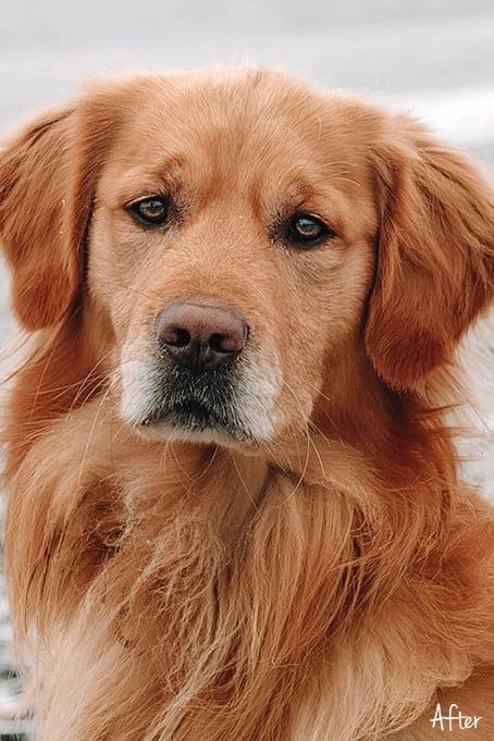 World of Pets Dogs prv03.2 - Dogs Lightroom Desktop and Mobile Presets