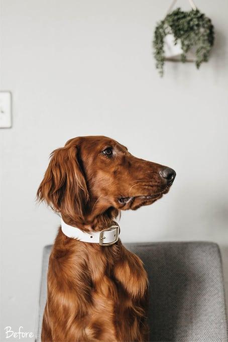 World of Pets Dogs prv05.1 - Dogs Lightroom Desktop and Mobile Presets