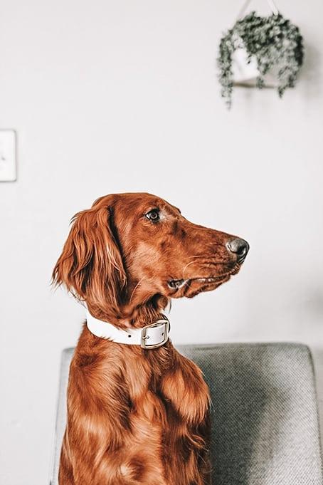 World of Pets Dogs prv05.2 - Dogs Lightroom Desktop and Mobile Presets