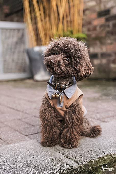 World of Pets Dogs prv06.2 - Dogs Lightroom Desktop and Mobile Presets